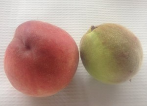 White peach and unripe peach on right